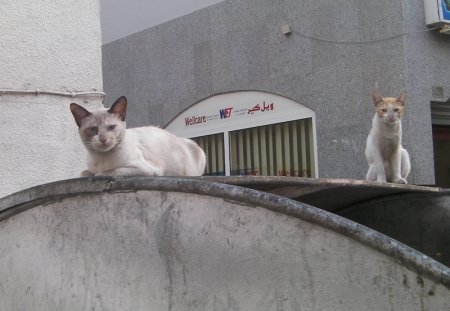 two cats on a dumpster