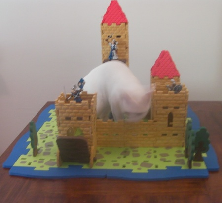cat and toy castle