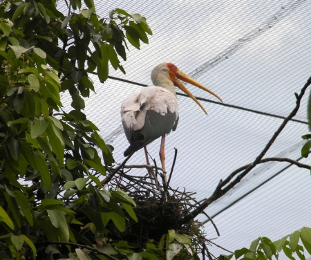 stork on its nest in a tree
