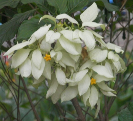white bloom with multiple petals and a yellow star shaped center