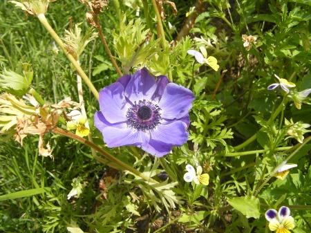 blue flower with ten petals