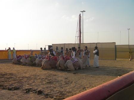 ten camels kneeling