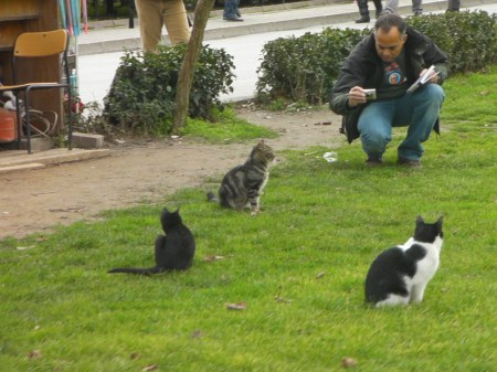 man photographing three cats