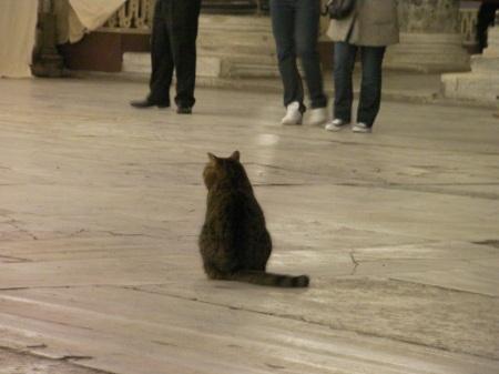 grey tabby inside the Hagia Sophia
