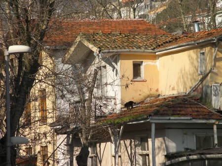 black cat on a roof