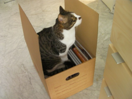 tabby cat sitting in cardboard box
