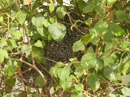 close up of the bee hive