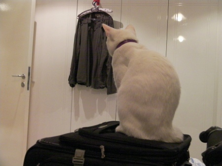 white cat sitting on top of suitcase