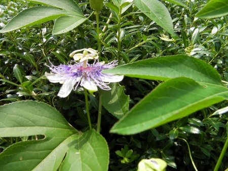 strange purple flower