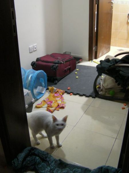 white cat in small room with toys