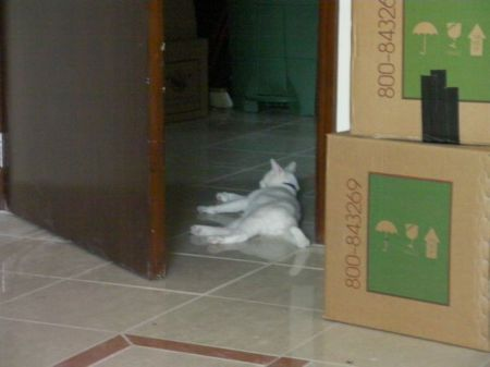 white cat lying on tile floor amidst moving boxes