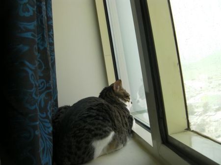 tabby cat sitting in a window sill