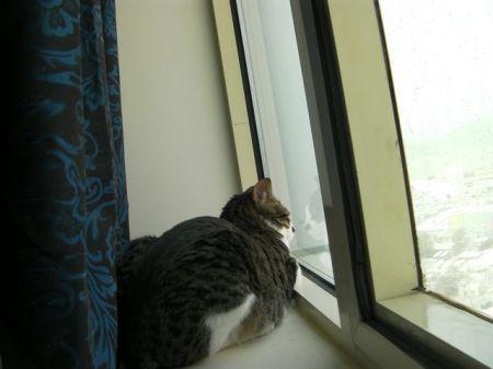 tabby cat sitting in a window sill