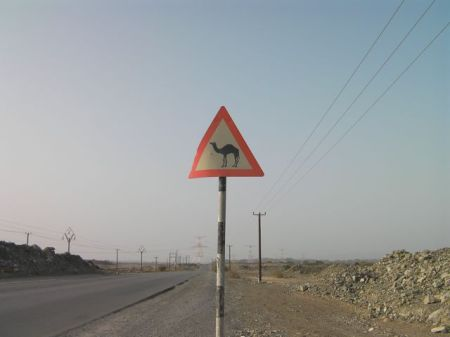 road sign warning of camels