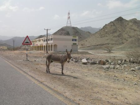 a tan donkey standing at the side of the road