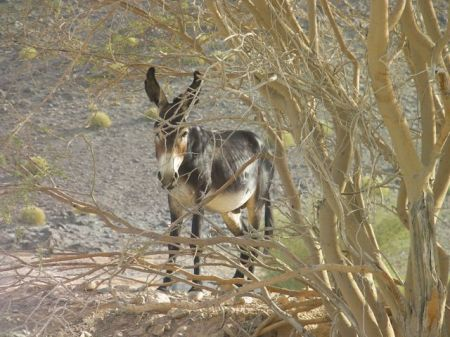 black donkey standing in the shade of a bush