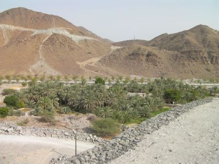 valley containing date palm trees