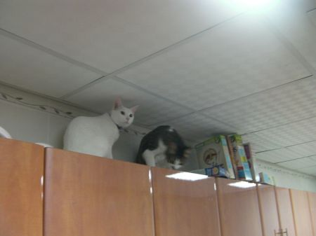 two cats on top of kitchen cabinets
