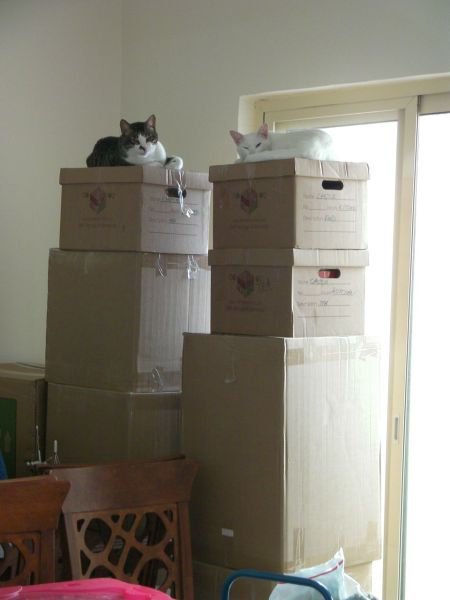 two five foot stacks of boxes with a cat on top of each