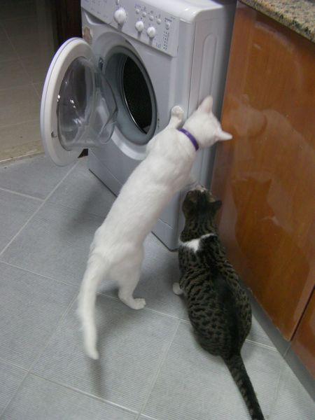 two cats examining the new laundry machine