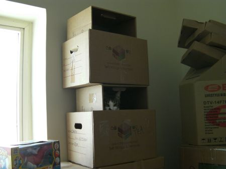 cat peeking out from a stack of boxes