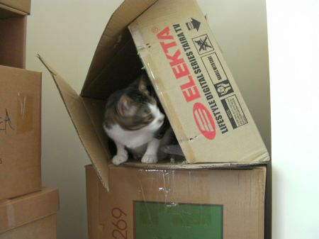 cat in a cardboard box