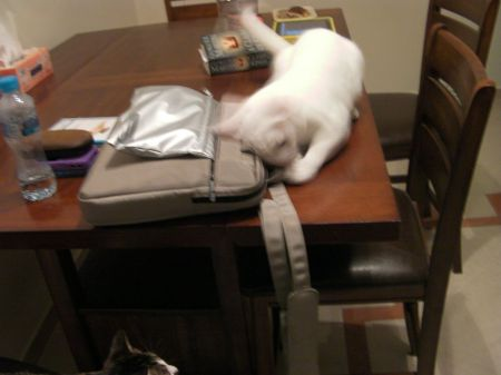 cat wallowing on a laptop bag