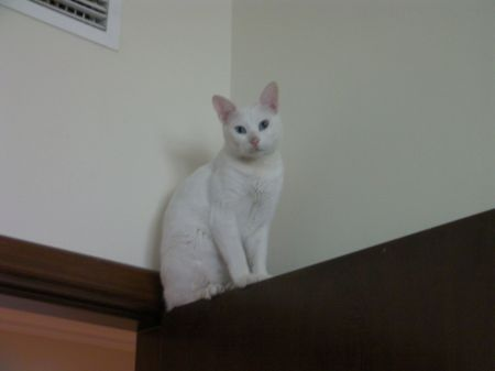white cat on top of a door with dirt on his nose