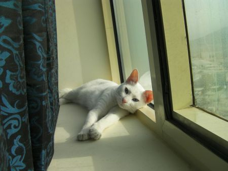 white cat laying on the window sill
