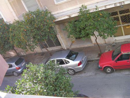 street lined with mandarine trees