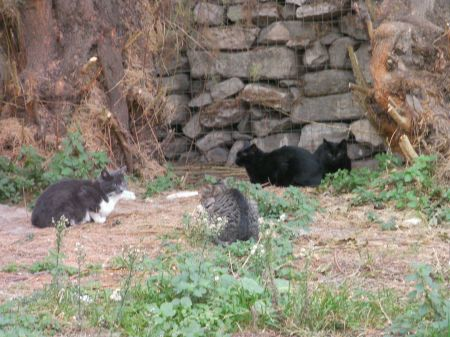two black and two grey stray cats