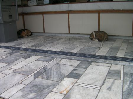 two dogs sleeping in the Acropolis ticket office