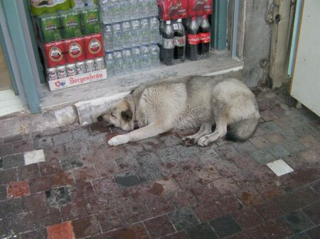 pale grey dog near a store doorway