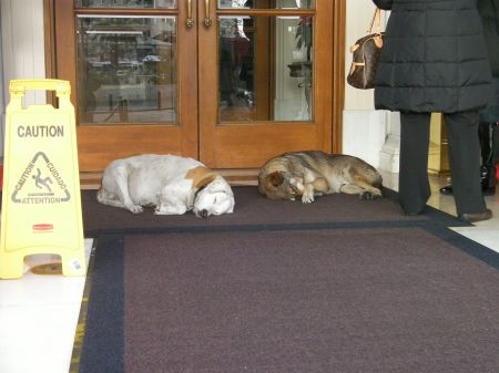 two dogs sleeping on a hotel porch