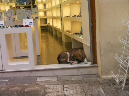 dog sleeping just inside a shop