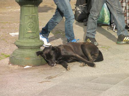 black lab dog sleeping against a street lamp