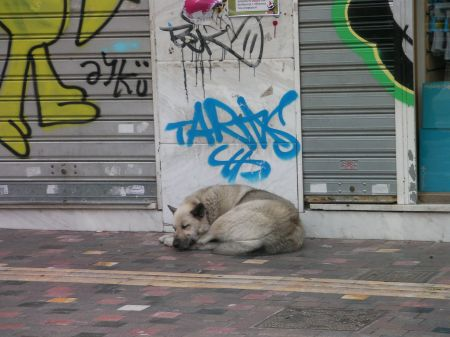 grey dog sleeping under some graffiti