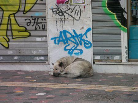 grey dog sleeping under some graffiti