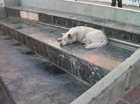 white dog sleeping on marble steps