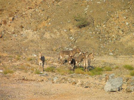 five donkeys