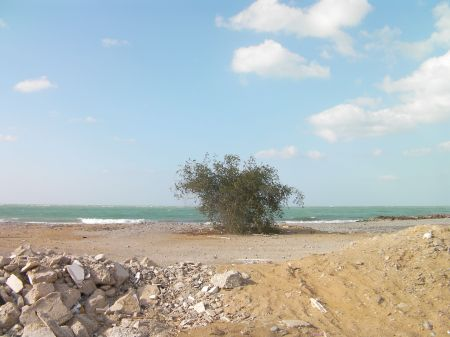 beach, green bush, and the Arabian gulf
