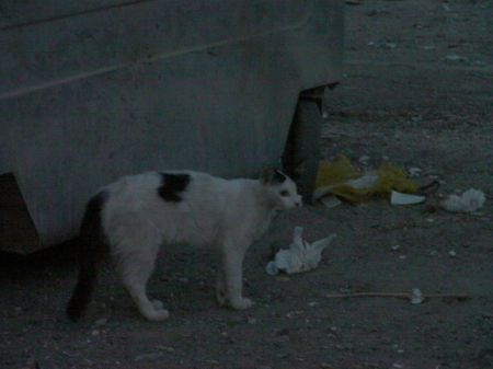 a stray cat next to a dumpster