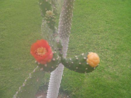 small orange bloom