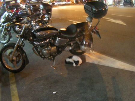 cat curled up and sleeping under a motorcycle parked at the side of the street