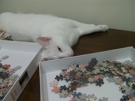 white cat laying next to a jigsaw puzzle box