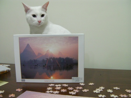 white cat sitting in the puzzle box