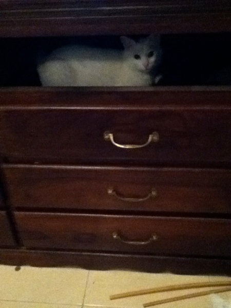 white cat inside a set of dresser drawers