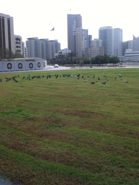 roundabout with only grass and a flock of pigeons