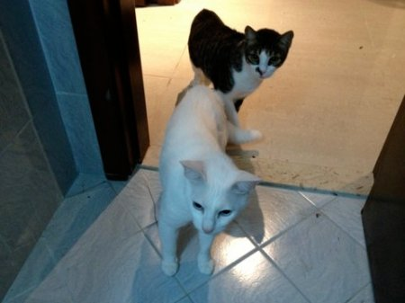 white cat and tabby cat looking curious