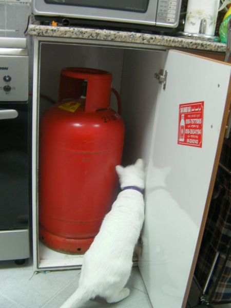 white cat inspecting the gas canister